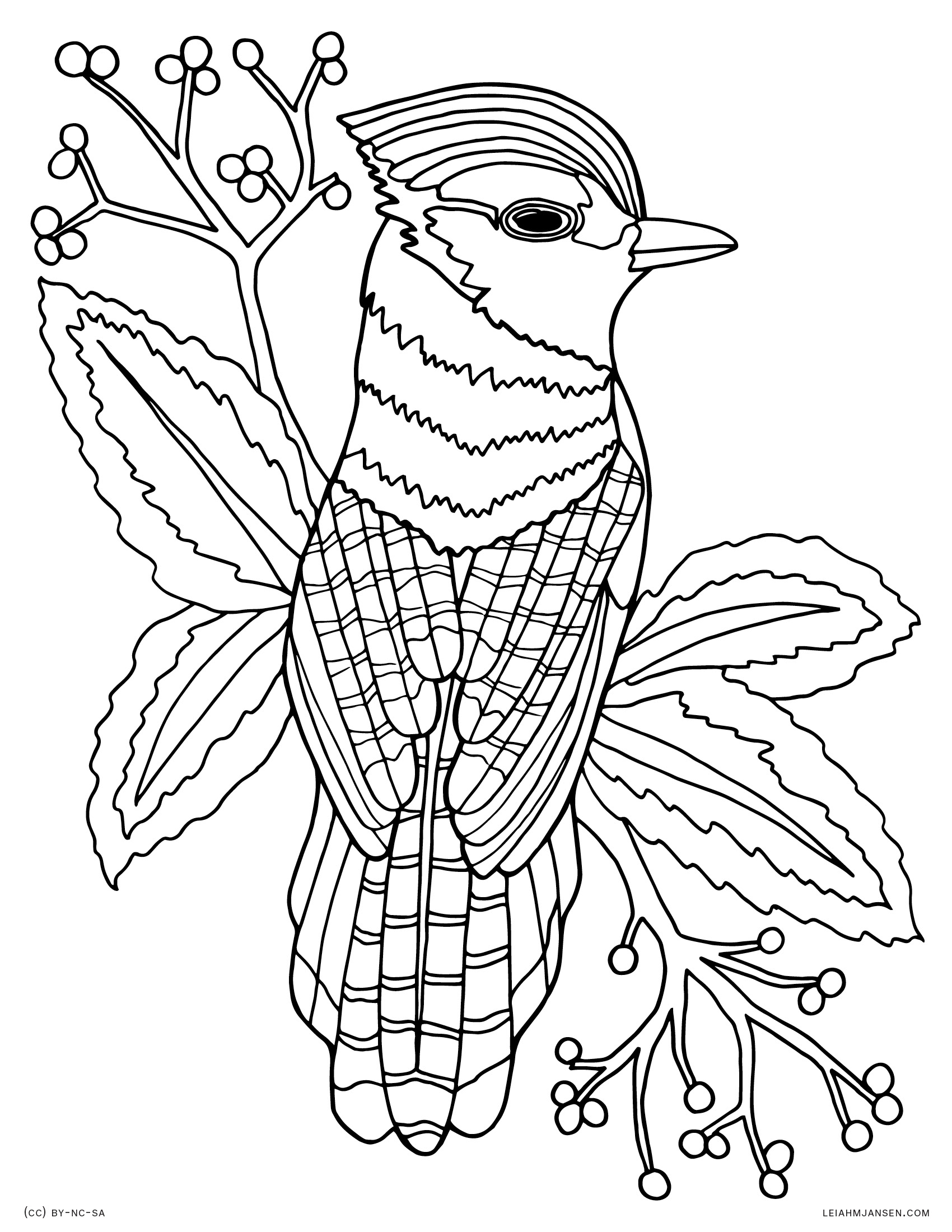 Bluejay bird realistic blue jay drawing free printable coloring page for adults and kids