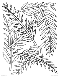 Ferns - Fern Leaves Pattern - Free Printable Coloring Page for Adults and Kids, by leiahmjansen.com @oleiah